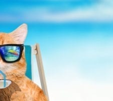 Bigstock Picture: Cat wearing sunglasses relaxing sitting on deckchair in the sea background.