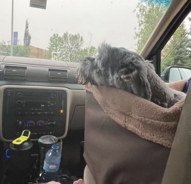 First time in PetSafe Happy Ride Dog Safety Seat