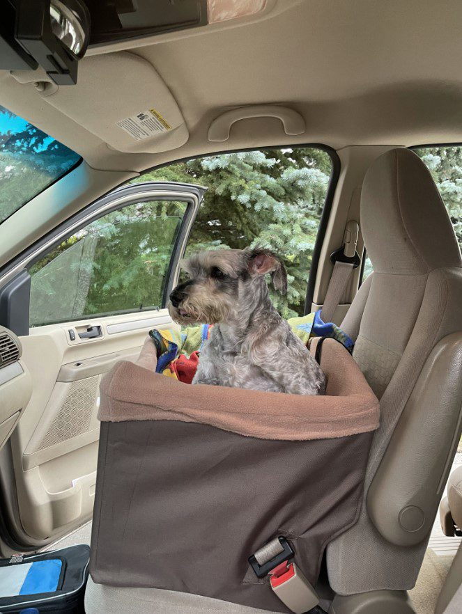 Getting ready for car ride ni PetSafe Happy Ride Dog Safety Seat
